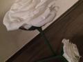 Mcs.30. sz Nagy rózsa